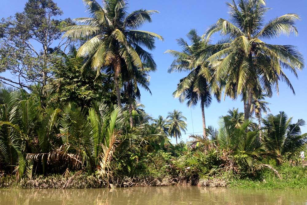 Vietnam-Guiding-Bentre-Coconut-Palm-Jungles