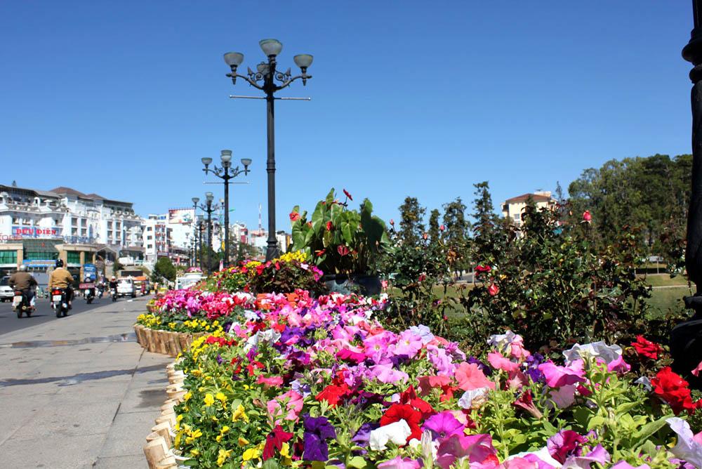 Dalat - Flower Street