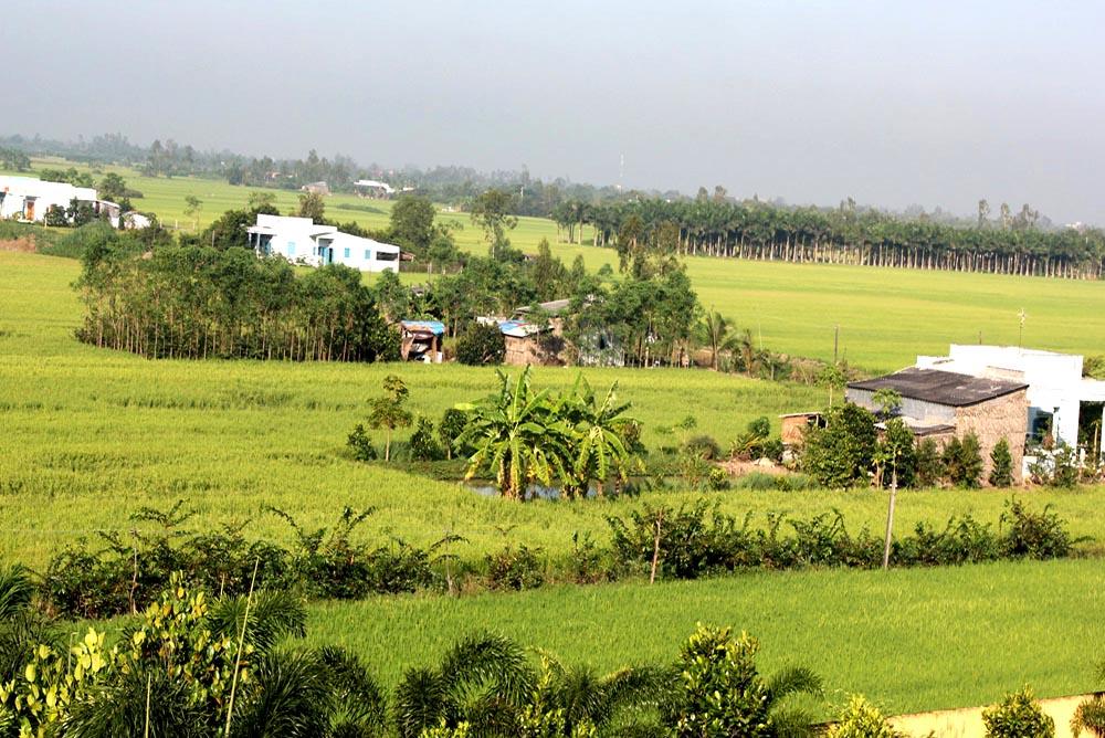 Mekong Rice Paddies
